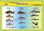 """Плакат """"Класифікація риби"""""""
