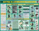 Догляд за службовими собаками