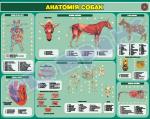 Анатомія собак